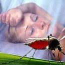 Malaria is not only the disease but also the science