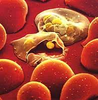 Hva er malaria