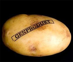 cartof modificat genetic