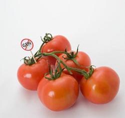 OMG Tomate