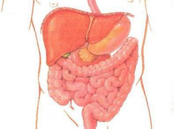 Methods for bowel cleansing, how to cleanse the bowel