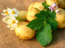 ziemniaków diety