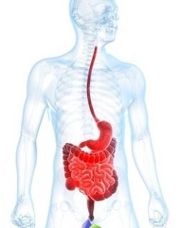 diseases-gastrointestinal-tract