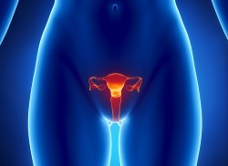 fibromioma-uterus