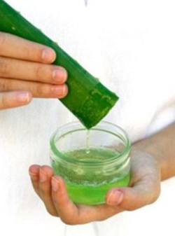 يعتبر عصير الألوة، أ، على التوالي، واستعدادات تحتوي على خصائص قوية مضادة للالتهابات ومؤسسات ومؤسسات مضادة للبكتيريا، وهي مهمة عند التعامل مع الكائنات الحية الدقيقة المسببة للأمراض