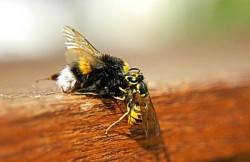 how-to-neutralize-a-wasp-sting