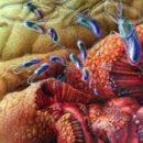 chronic gastritis with low acidity