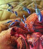Chronische Gastritis mit niedrigem Säuregehalt