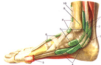 Plastic Foot Code with your own tendon. Indications and Contraindications to the operation