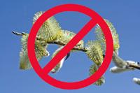 April-Thesen von Allergikern