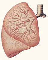 What is chronic lung abscess