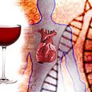 What is alcoholic cardiomyopathy