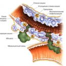 treatment and prevention of Crohn's disease