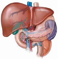 Хепатит: познаване на врага наглед
