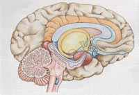 Causes and mechanisms leading to the brain abnormalities