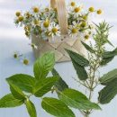herbs and gymnastics for a good sleep