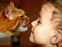 animaloterapiya treatment of animals