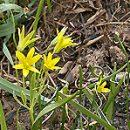 win spring colds and beriberi