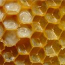 royal jelly to help the young mother