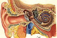 Професионални заболявания на ухото