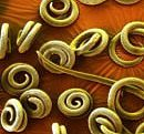 worms myths