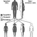 assort heredity