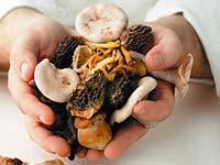 Гъбите като причина за немикробно хранително отравяне