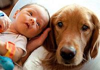 Алергична бронхиална астма при деца