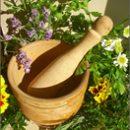 Phytotherapy against erythrasma