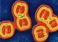 causes and mechanism of development of meningitis