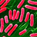 Symptoms and Treatment of listeriosis