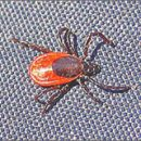tick season is in full swing Protect yourself and your family