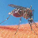 I do not ruin a mosquito