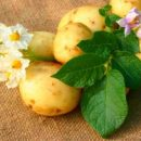 potato-diet